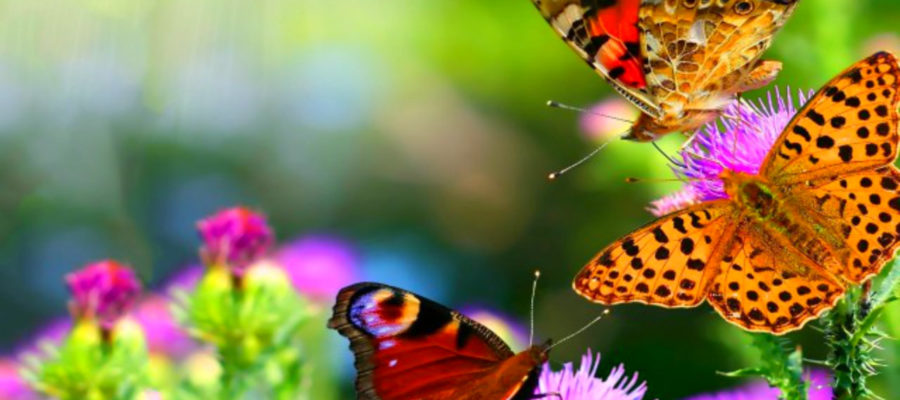 colorful-butterfly-backgrounds-21-hd-wallpaper